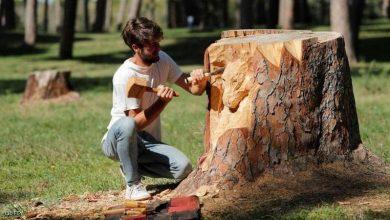 Photo of لوحات فنية مميزة من جذوع الاشجار