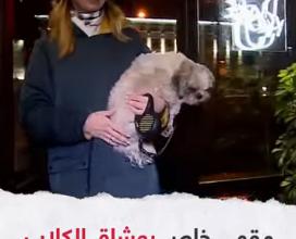 Photo of مقهى خاص بعشاق الكلاب بمدينة بيرم الروسية