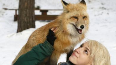 Photo of حذر ممثلو منظمات خيرية عالمية من تجنب محاولة إخضاع الحيوانات البرية لتعيش في ظروف منزلية