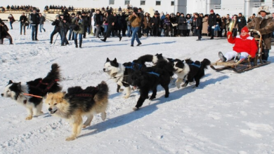 Photo of جرو حفظ في الجليد الأزلي طيلة 18 ألف عام بمدينة ياكوتسك بأقصى شمال شرق روسيا