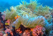 Photo of علماء جامعة إكستر البريطانية اكتشاف طريقة مبتكرة تساهم في ترميم الشعاب المرجانية في البحار والمحيطات