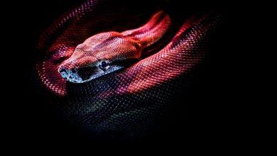 """Photo of علماء ينتجون """"سم"""" الثعابين لأول مرة في المختبر!"""