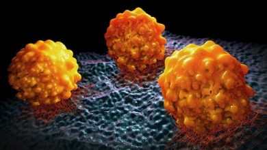 Photo of أدوية مكافحة السمنة توقف انتشار السرطان