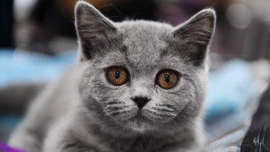 "Photo of قطة ""منقطعة النظير"" بعشرين مليون روبل"