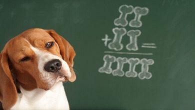 Photo of الكلاب الضالة تملك قدرات غير متوقعة في التواصل مع البشر
