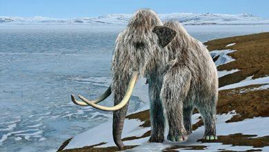 Photo of اكتشاف سبب انقراض الماموث
