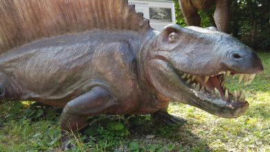 Photo of اكتشاف نوع جديد من الديناصورات