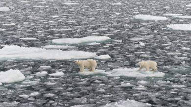 Photo of توقعات بحدوث عصر جليدي قصير