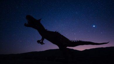 "Photo of اكتشاف مرض بشري نادر ""مخفيا"" في ذيل ديناصور منقرض!"