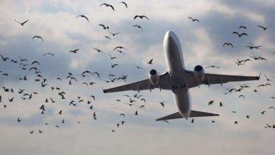 Photo of ضربات الطيور: ظاهرة تهدد حركة الطيران وهكذا يتم التعامل معها